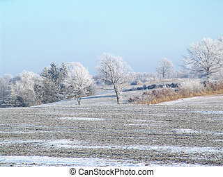 a frosty day - landscape with trees on a strong winter day