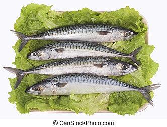 Mackerel ( fish )
