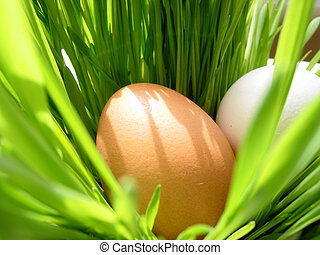 Easter eggs in grass - Easter eggs in very bright green...