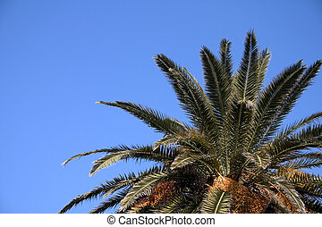 Palm Tree - Palm tree top