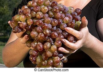 grapes - golden harvest