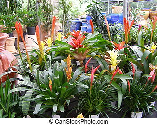 Amazon originated plants from a garden center.