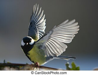 Bird start to fly - I like it to observe wildlife birds. I...