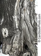 viejo, árbol, cierre, Arriba