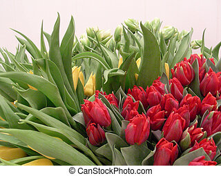 lot of  tulips - 200 pieces of tulips