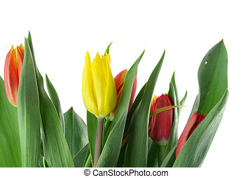 bouquet of colorful tulips on white