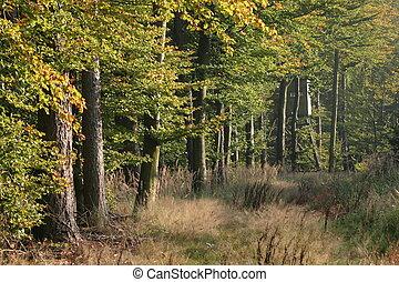 temprano, otoño, bosque