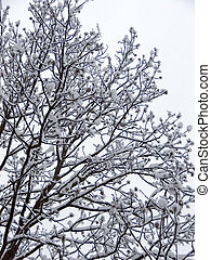Winter forest - Limb of trees on winter