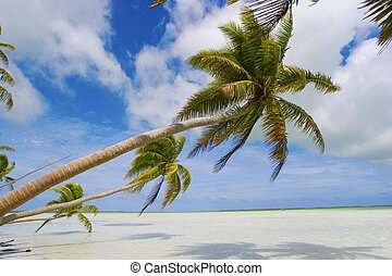 Tropical Beach scene - tropical beach in the South Pacific