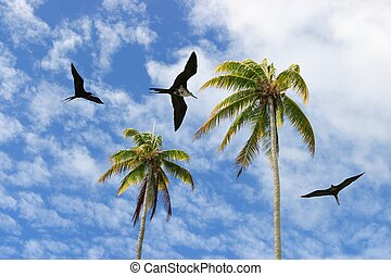 Albatross - albatross flying around palmtrees-south pacific