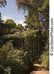 kilimanjaro 032 mweka exit gates forest