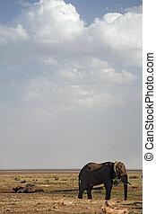 動物,  020, 象