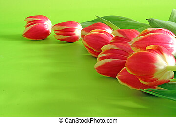 tulips on green backround - tulips lying on green background