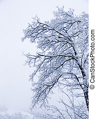 Winter forest - Limbs of winter tree