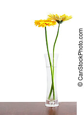 Flowers in Vase - Two yellow gerbers in a glass vase ona...