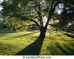 Long shadow of a tree in a park in Ottawa