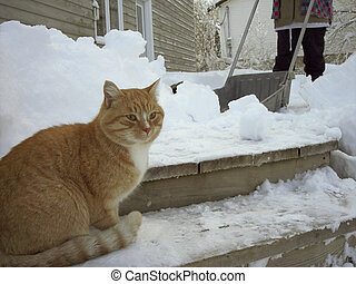 Snow Shoveling - o1 - Shoveling snow off deck, with cat...