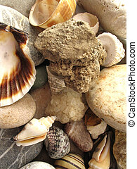 Underwater objects - Seashells and small stone