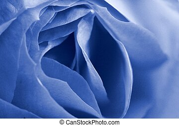 Blue Rose Detail