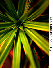 Abstract Vegetation Starburst