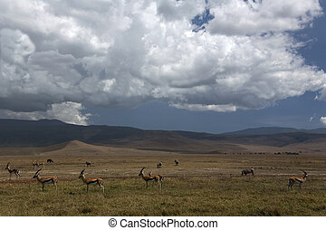 africa landscape 035 ngorongoro.