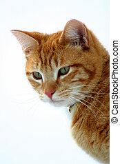 Stalker 8 - Feline