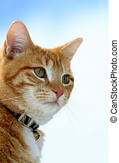 Stalker 10 - Feline