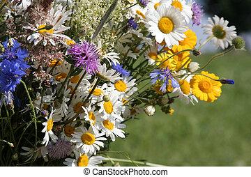 Field Flowers - Flowers of the field