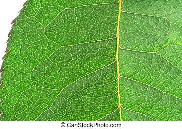 green vivid leaf det