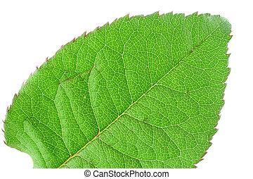 green vivid leaf details