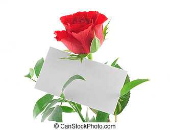 single red rose with blank love note