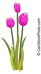 Tulips purple - Illustrated purple tulips