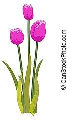 Tulips purple - Illustrated purple tulips