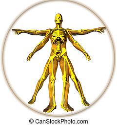 Renaissance man - Man and skeleton in Leonardo man pose