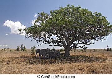 動物,  050, 象