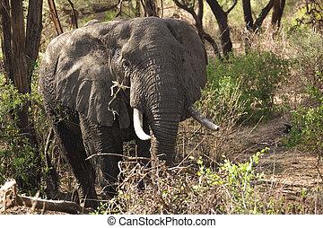 動物,  014, 象