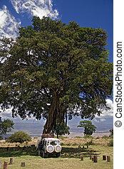 africa landscape 015 ngorongoro tree
