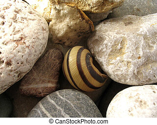 Snail and stone - Snail between stone