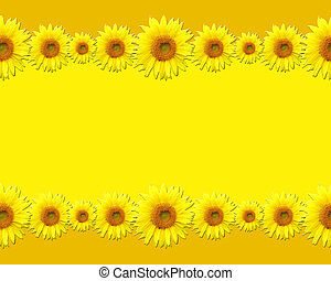 Sunflowers with blank space for words or picture