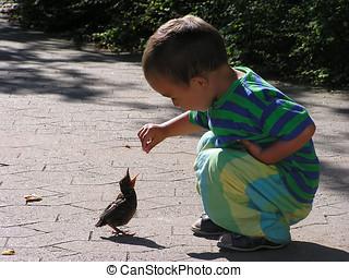 feeding a blackbird - Young boy feeding a blackbird on a...