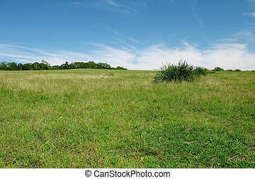 Perfect Pasture - Green pasture and blue sky