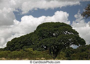 africa landscape 017 ngorongoro tree