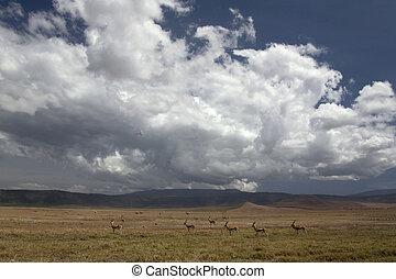 africa landscape 036 ngorongoro