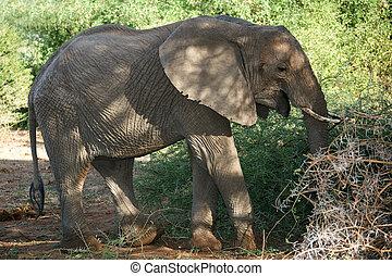 動物,  016, 象