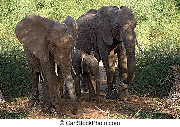 017, 動物, 象