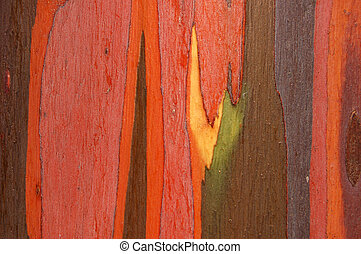 Eucalyptus bark - Detail of eucalyptus bark