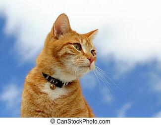 Stalker 12 - Feline