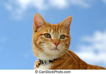 Stalker 13 - Feline