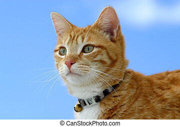 Stalker 14 - Feline