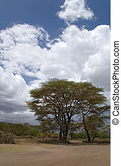 africa landscape 041 ngorongoro